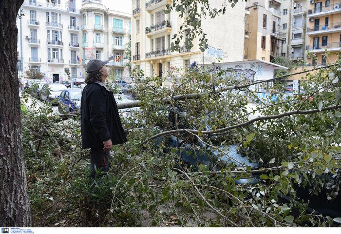 Επεσαν δέντρα και καταπλάκωσαν αυτοκίνητα στη Θεσσαλονίκη  [Εικόνες] - εικόνα 2