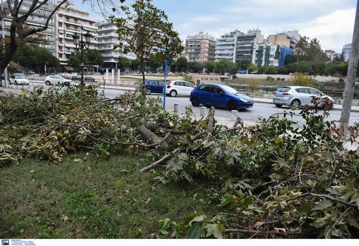 Επεσαν δέντρα και καταπλάκωσαν αυτοκίνητα στη Θεσσαλονίκη  [Εικόνες] - εικόνα 7