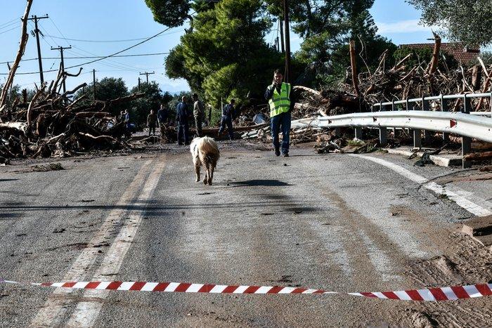 Τα σκυλιά που σώθηκαν από τη θεομηνία στην Κινέτα - εικόνα 8