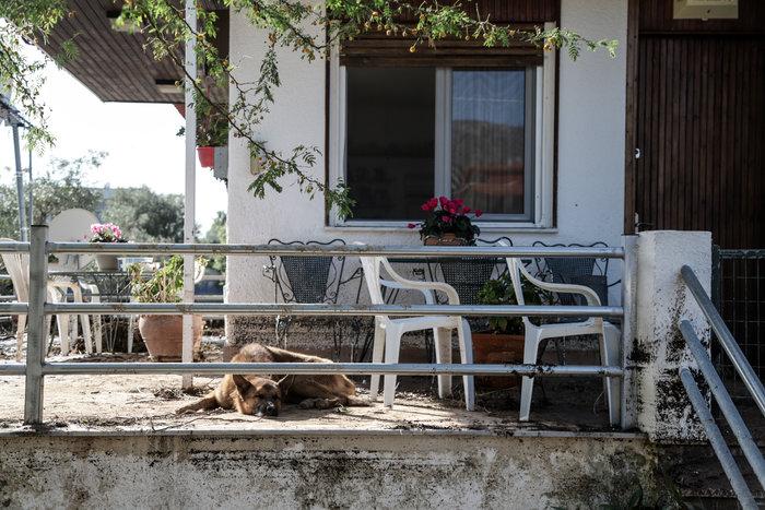 Τα σκυλιά που σώθηκαν από τη θεομηνία στην Κινέτα - εικόνα 7