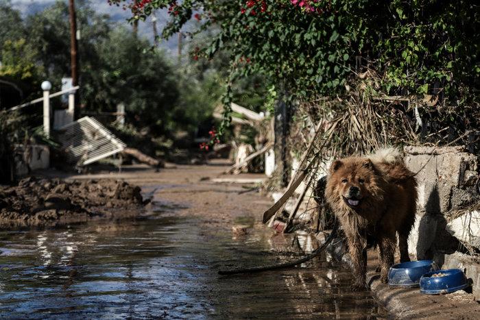 Τα σκυλιά που σώθηκαν από τη θεομηνία στην Κινέτα - εικόνα 6