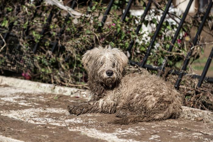 Τα σκυλιά που σώθηκαν από τη θεομηνία στην Κινέτα - εικόνα 5