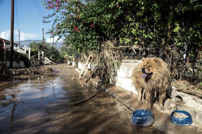 Τα σκυλιά που σώθηκαν από τη θεομηνία στην Κινέτα - εικόνα 4