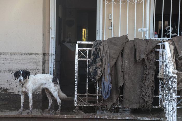 Τα σκυλιά που σώθηκαν από τη θεομηνία στην Κινέτα - εικόνα 3