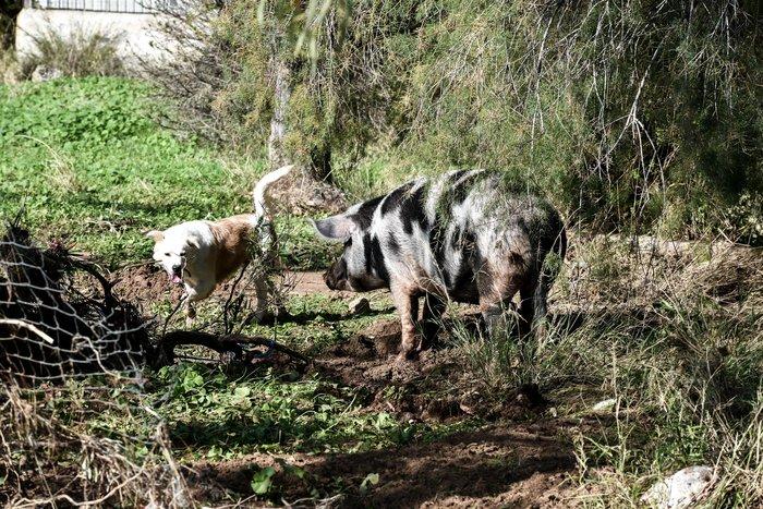 Τα σκυλιά που σώθηκαν από τη θεομηνία στην Κινέτα