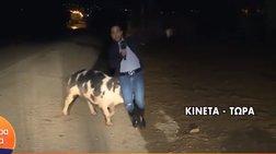 Γουρούνι κυνηγά ρεπόρτερ του Παπαδάκη σε ζωντανή σύνδεση [Βίντεο]