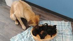 Αδέσποτη σκυλίτσα έσωσε από βέβαιο θάνατο νεογέννητα γατάκια