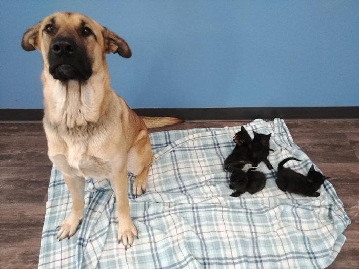 Αδέσποτη σκυλίτσα έσωσε από βέβαιο θάνατο νεογέννητα γατάκια - εικόνα 2