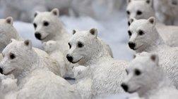 Εκκένωση οικισμού που έχει κατακλυστεί από πολικές αρκούδες
