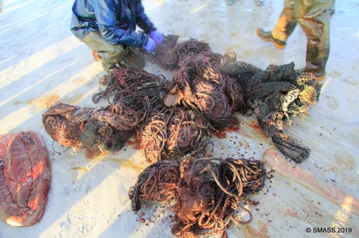 Εικόνες σοκ: Νεκρή φάλαινα με 100 κιλά σκουπίδια στο στομάχι - εικόνα 3