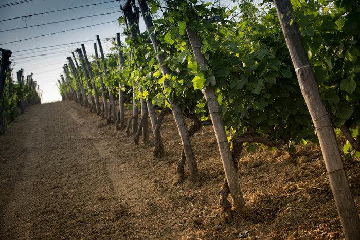 Ποιο κρητικό κρασί έχει τη σφραγίδα της Βασίλισσας Ελισάβετ - εικόνα 5