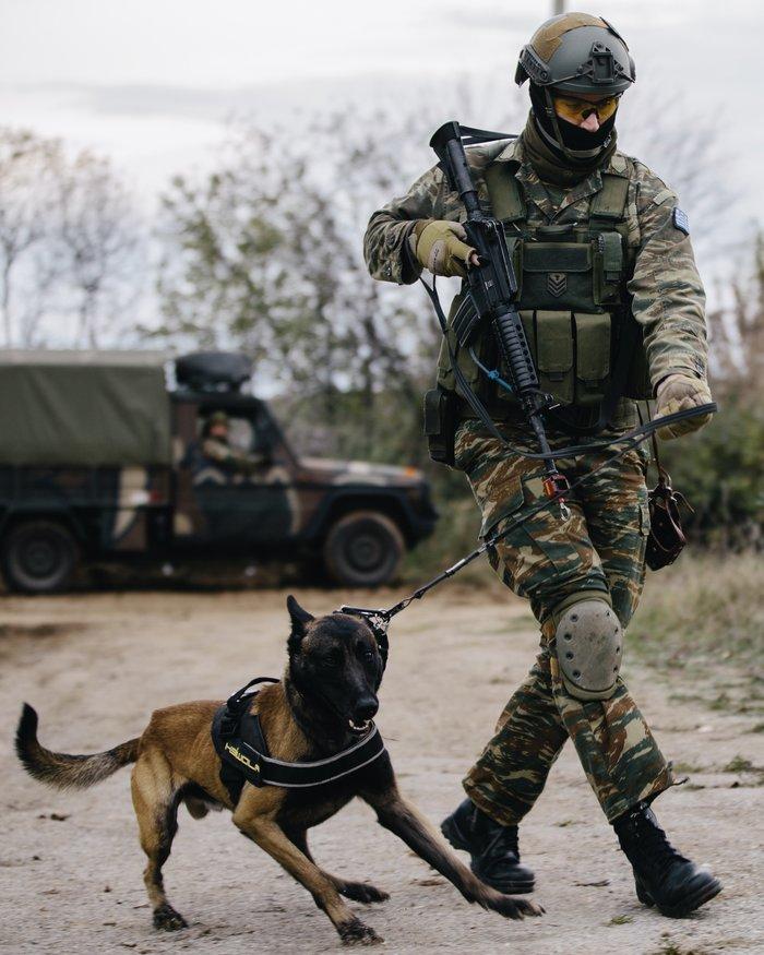 Τετράποδοι «κομάντος» στον Ελληνικό  Στρατό μαζί με αμερικανούς στρατιώτες