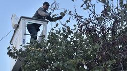 Ο δήμος Αθήνας στολίζει την πόλη για τα Χριστούγεννα [φωτό]