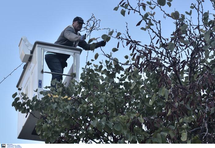 Ο δήμος Αθήνας στολίζει την πόλη για τα Χριστούγεννα [φωτό] - εικόνα 4