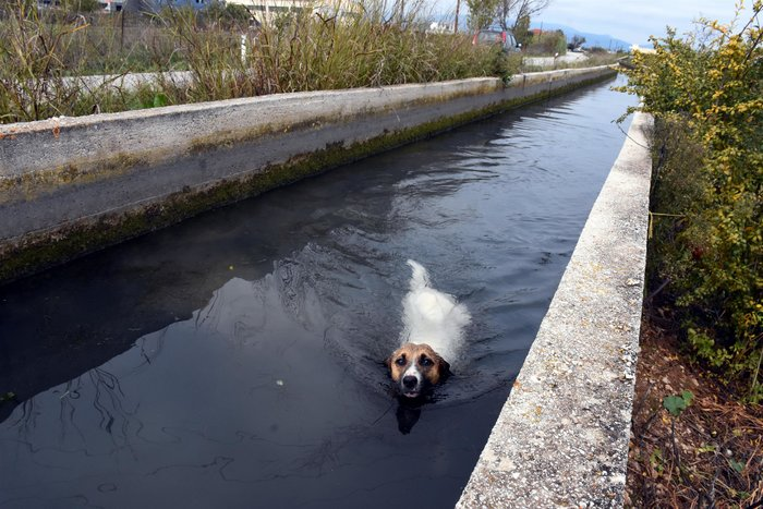 Θηροφύλακας σώζει σκύλο από αρδευτικό κανάλι στο Άργος