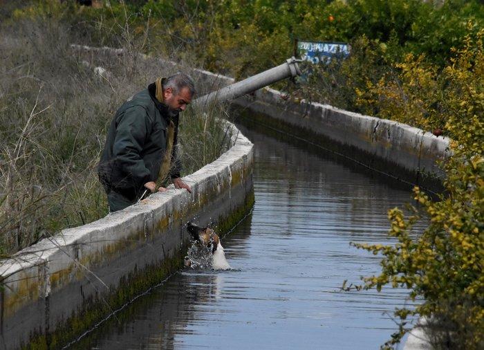 Θηροφύλακας σώζει σκύλο από αρδευτικό κανάλι στο Άργος - εικόνα 3
