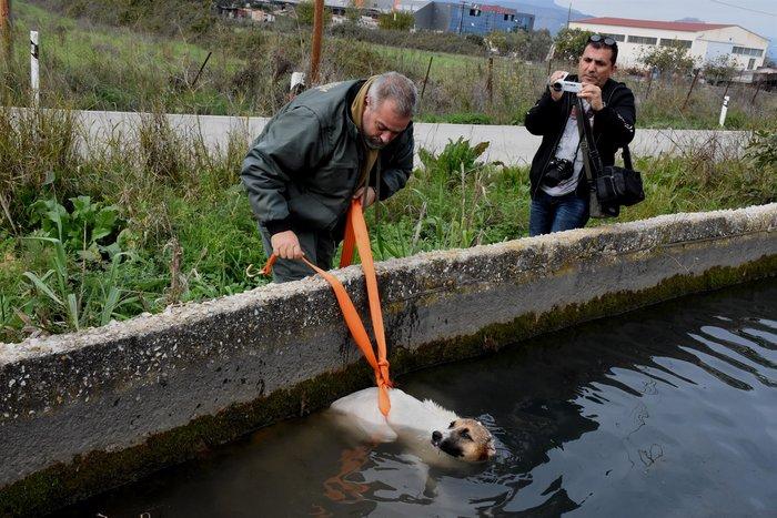 Θηροφύλακας σώζει σκύλο από αρδευτικό κανάλι στο Άργος - εικόνα 4