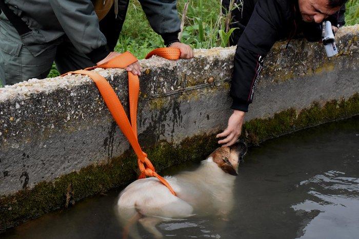Θηροφύλακας σώζει σκύλο από αρδευτικό κανάλι στο Άργος - εικόνα 5