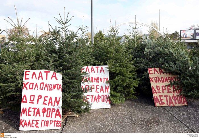 Δέντρα από τον Ταξιάρχη: Η ζωή στον δρόμο, τα παζάρια και οι προτιμήσεις