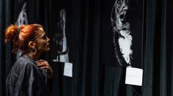 """Eyes behind bars"": Έκθεση του Νίκου Ζήκου & του Save a Greek Stray"