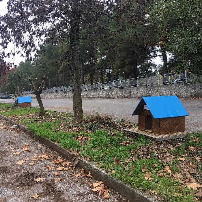 Σπιτάκια για τα αδεσποτάκια- Μια συγκινητική πρωτοβουλία του Δήμου Δίου