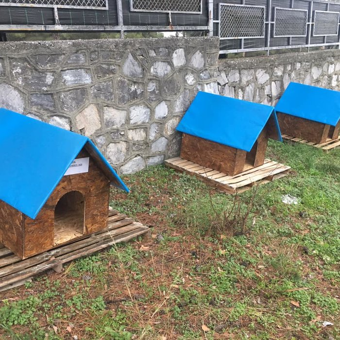 Σπιτάκια για τα αδεσποτάκια- Μια συγκινητική πρωτοβουλία του Δήμου Δίου - εικόνα 2