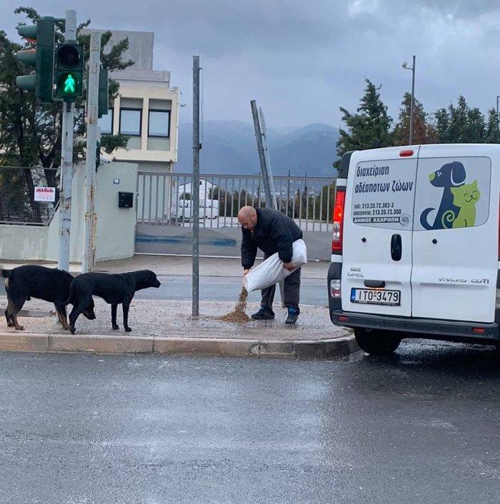 Μπράβο: Ο Δήμαρχος Αχαρνών έστειλε υπαλλήλους να ταΐσουν τα αδέσποτα