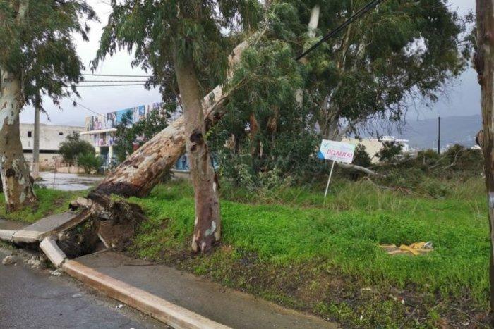 Χανιά: Κατολισθήσεις και απεγκλωβισμοί - ξεριζώθηκαν δέντρα - εικόνα 2