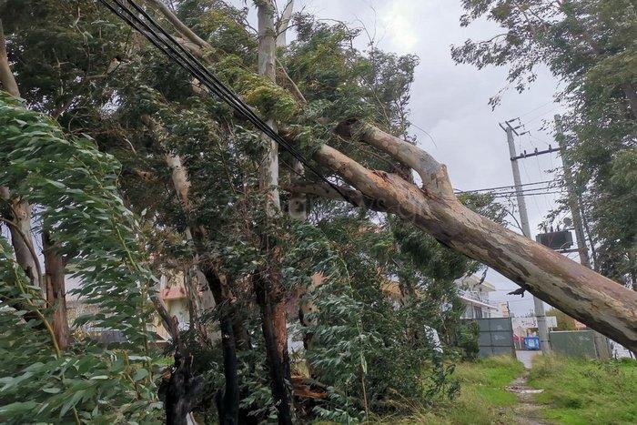 Χανιά: Κατολισθήσεις και απεγκλωβισμοί - ξεριζώθηκαν δέντρα - εικόνα 4