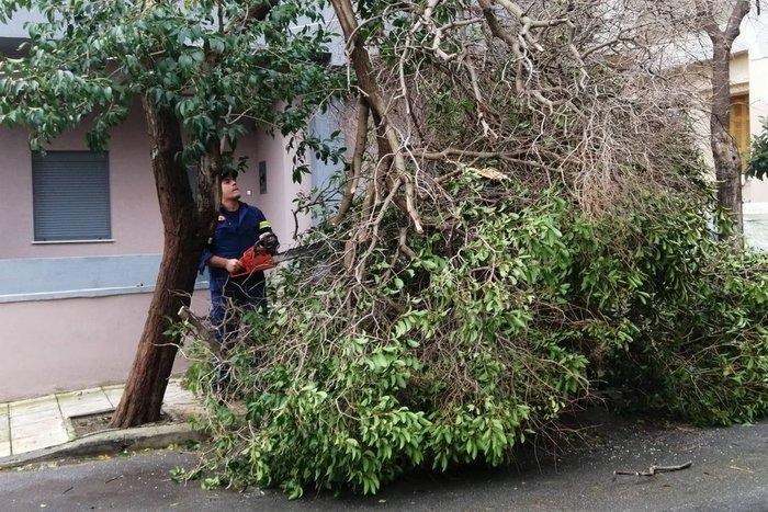 Χανιά: Κατολισθήσεις και απεγκλωβισμοί - ξεριζώθηκαν δέντρα - εικόνα 6