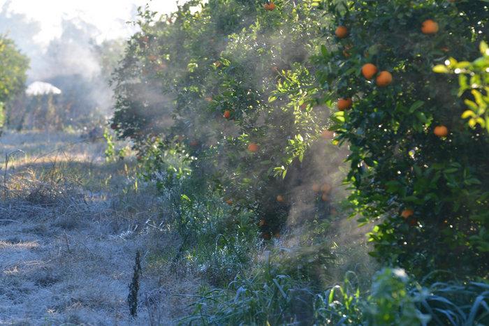 Πάγωσαν μέχρι και τα πορτοκάλια στην Αργολίδα [εικόνες] - εικόνα 5