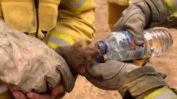 Συγκινητικό: Πυροσβέστες στην Αυστραλία σώζουν ζωάκι από τις φωτιές