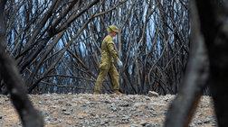 Απίστευτο: Οι φωτιές στην Αυστραλία έκαψαν έκταση όσο η Ιρλανδία