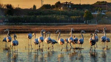 uperoxa-flamingko-ston-ugrotopo-tou-agiou-mama-eikones