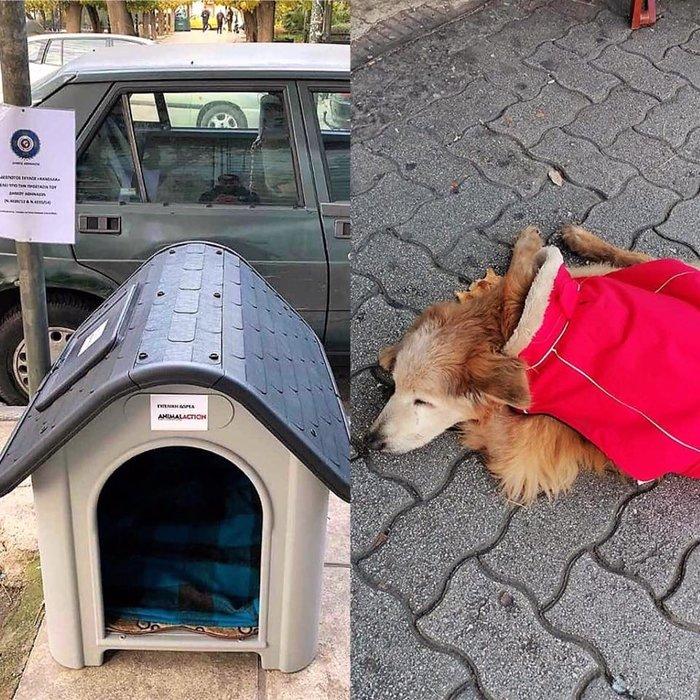 Επισημα υπό την προστασία του Δήμου Αθηναίων η αδέσποτη σκυλίτσα Κανέλλα