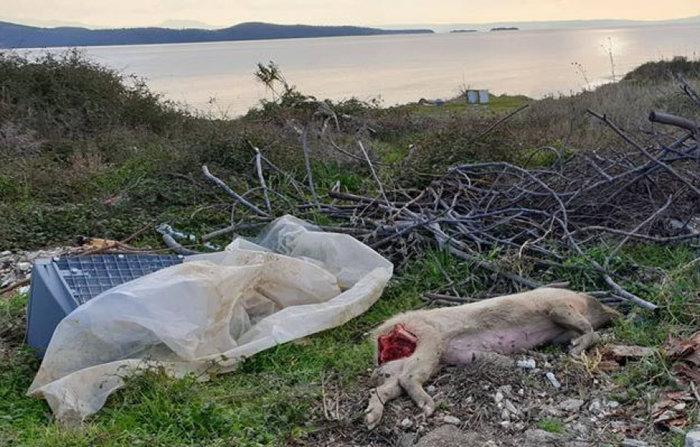 Χωματερή και πεταμένα ζώα στην Τρυπητή Χαλκιδικής (ΦΩΤΟ)