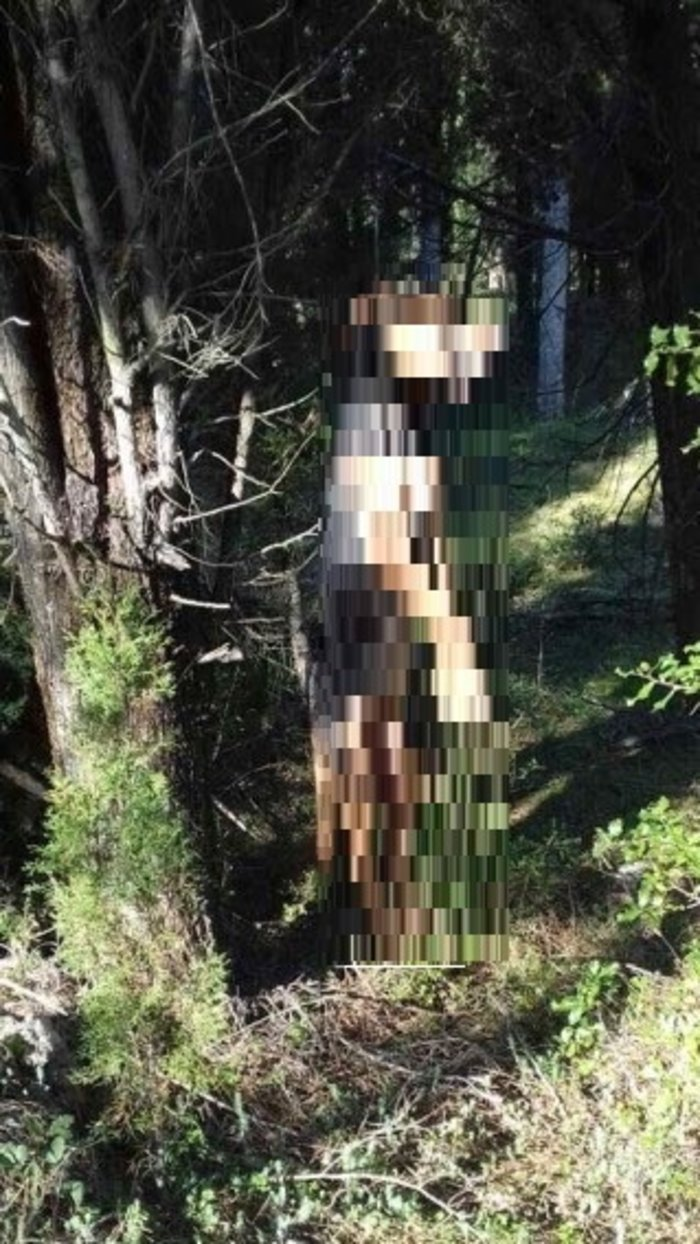 Φρίκη: Κρέμασαν σκυλάκο από δέντρο σε χωριό της Τεγέας