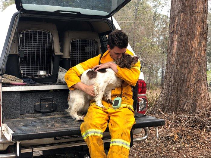 Αυστραλία: Το αγγλικό σπρίνγκερ σπάνιελ που διασώζει κοάλα στις πυρκαγιές
