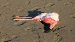 sokaroun-oi-eikones-me-ta-nekra-flamingko-stin-kupro
