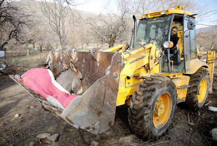 Εικόνα-σοκ στην Τουρκία: Τραυματίας γάιδαρος μεταφέρεται με εκσκαφέα - εικόνα 2