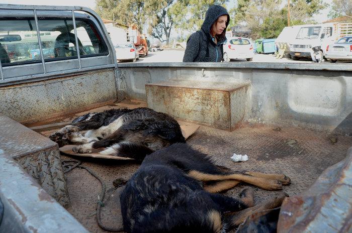 Ναύπλιο: Ο Δήμος επικήρυξε δολοφόνους αδέσποτων σκυλιών