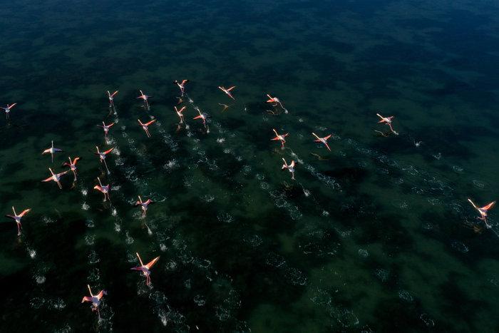 Λιμνοθάλασσα του Μεσολογγίου: Μαγευτικές εικόνες από drone - εικόνα 3