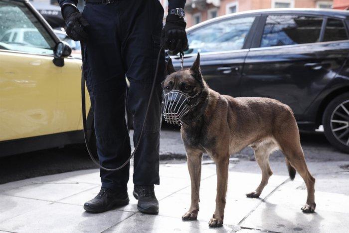 Περιπολίες με σκύλους στα Εξάρχεια- Το νέο στίλ αστυνόμευσης της περιοχής - εικόνα 2