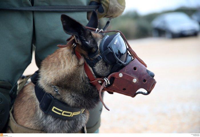 Στρατιωτική άσκηση σαν πόλεμος με καταδρομείς από επτά χώρες - εικόνα 3