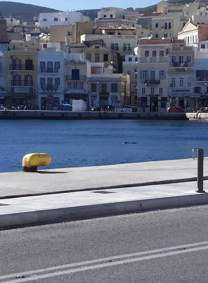 Η χαριτωμένη φώκια βγήκε βόλτα στο λιμάνι της Σύρου
