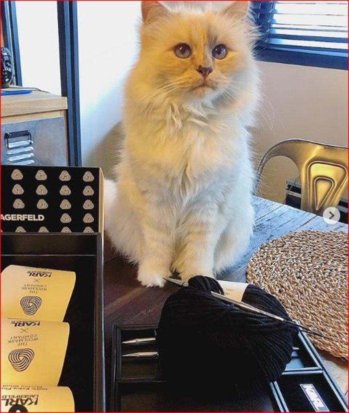 Tι κάνει η γάτα του Λάγκερφελντ ένα χρόνο μετά το θάνατό του